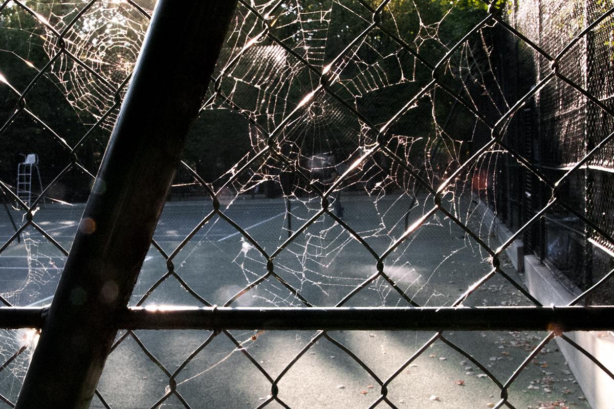 A tennis court with a spider's web illuminated by the sun and hanging on the mesh.