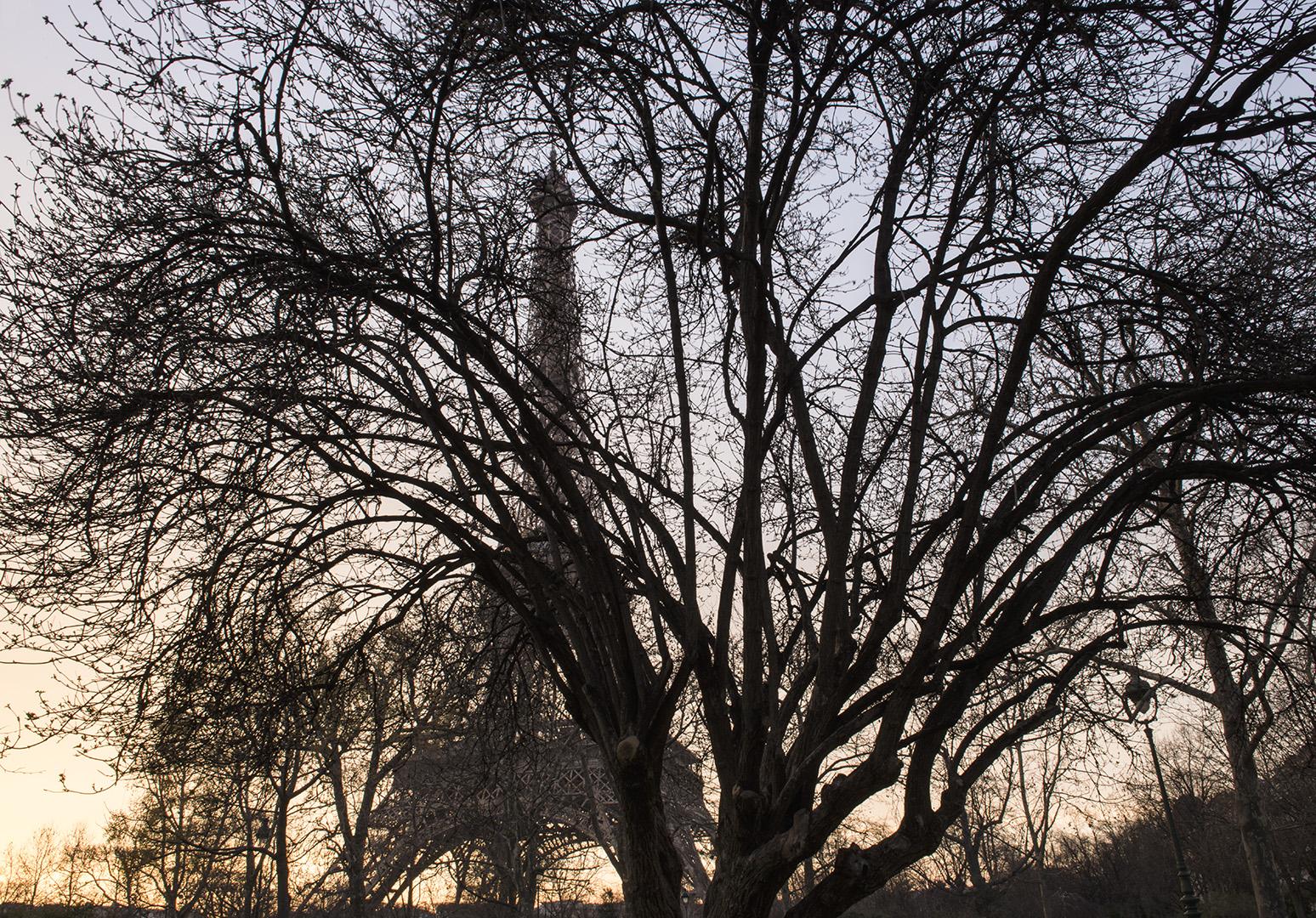 Analogie entre les arbres qui entourent la tour Eiffel et les échafaudages d'un immeuble géant