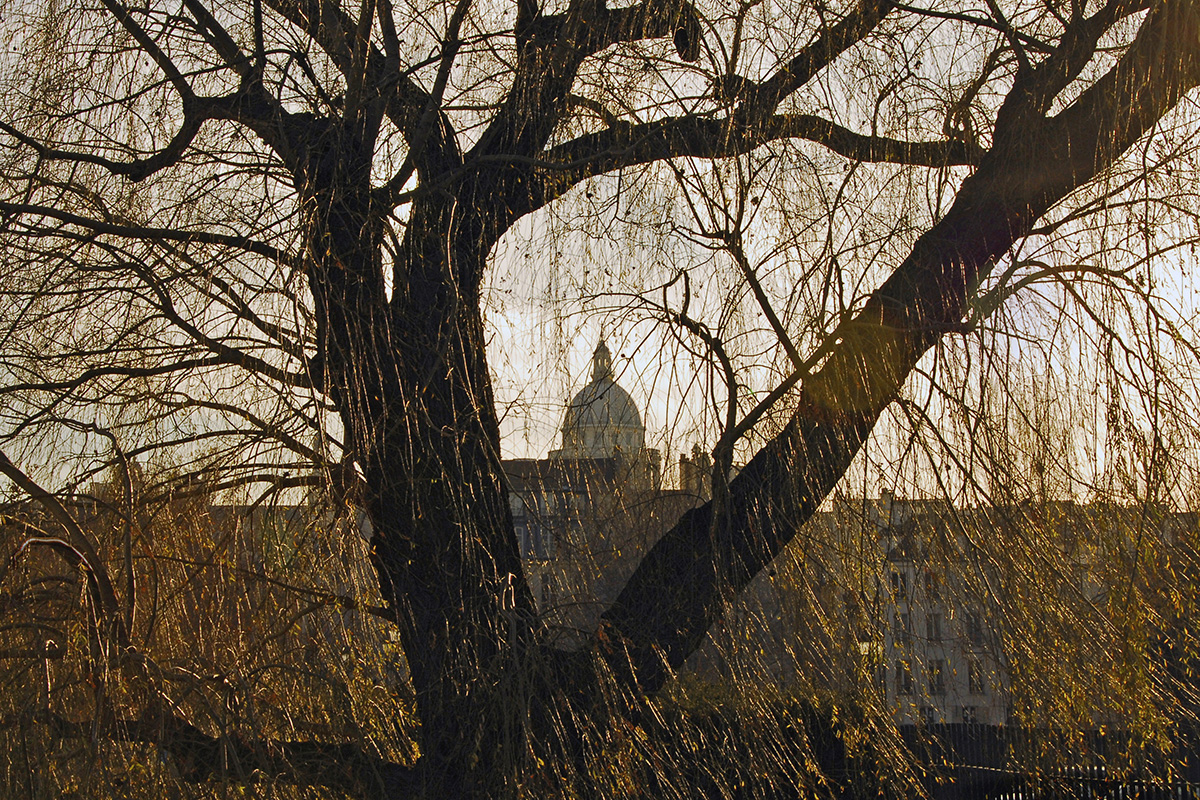 L'arbre semble écarter ses bras ou servir d'écrin pour le dôme du Panthéon