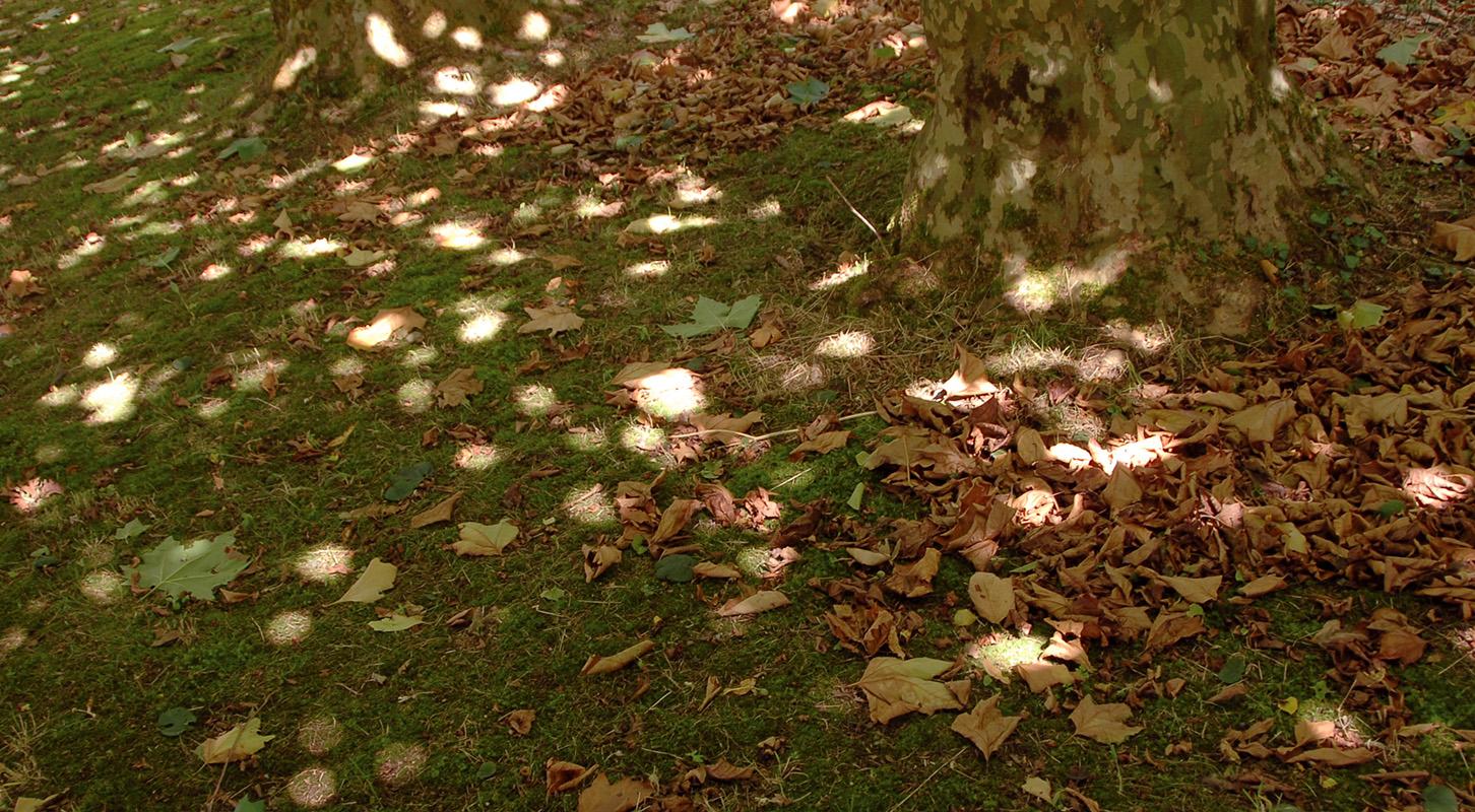 Les arbres filtrent le soleil, les taches de lumière se mélangent aux feuilles comme chez Monet ou Renoir.