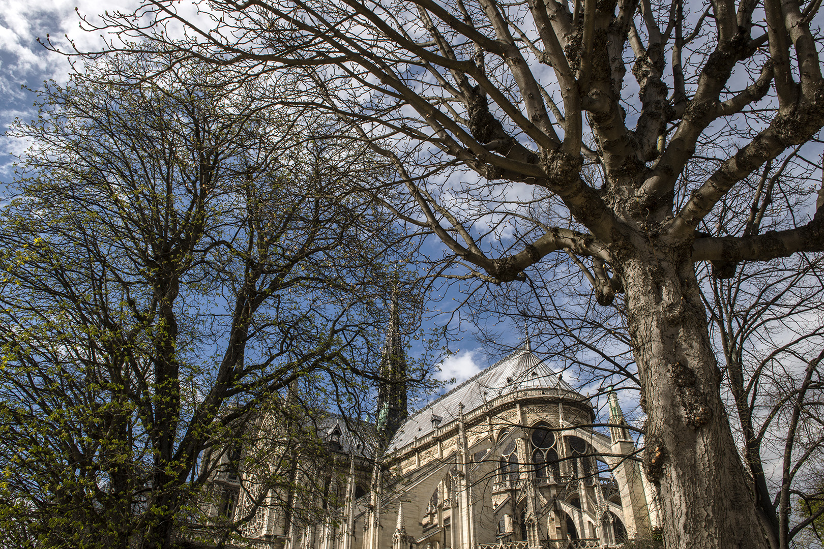 There is some analogy between the flying buttresses of the gothic cathedral and the bare branches of the trees.