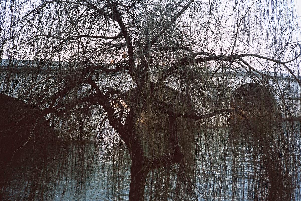 Les fines branches du saule pleureur devant le pont semblent être le fin maillage d'une tapisserie