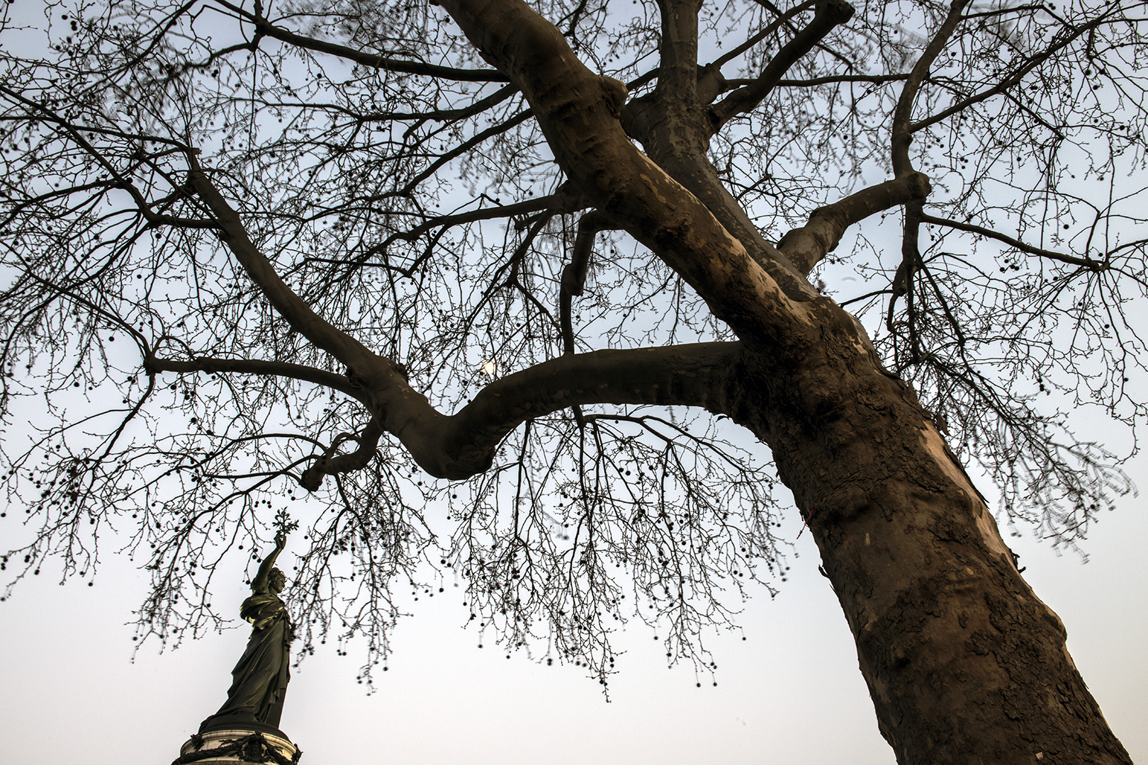 The allegory of the Republic raises high an olive branch which blends in with the fronds of a plane tree.