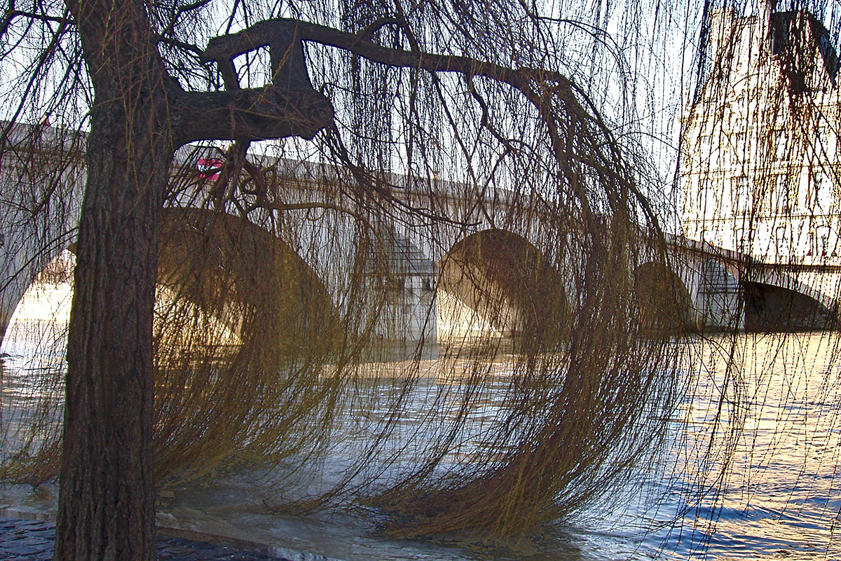The branches of the weeping tree trailing from the arches of the bridge above the Seine.