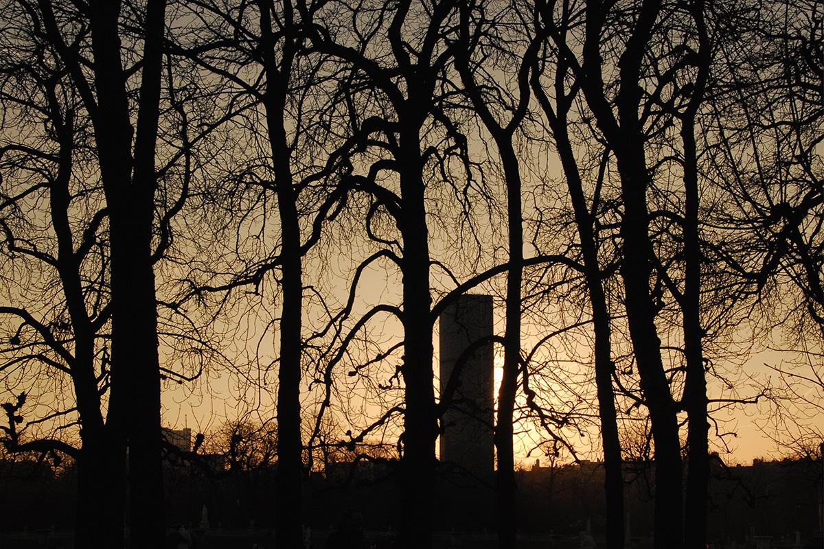 La tour Montparnasse paraît petite comme un totem au milieu des arbres d'hiver du bois sacré